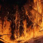 wildfire-1138193_640.jpg