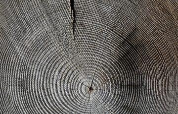 wood-618673_640.jpg