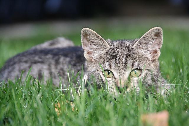 cat-1241839_640