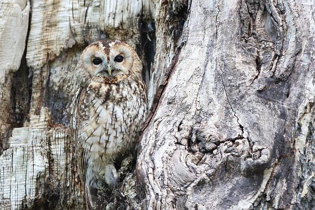 owl-1576572_640