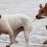 dogs-708354_640