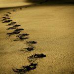 sand-768783_640