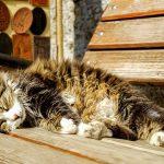 cat-2397607_640