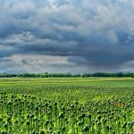 field-of-poppies-3432640_640