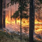 forest-fire-2268725_640