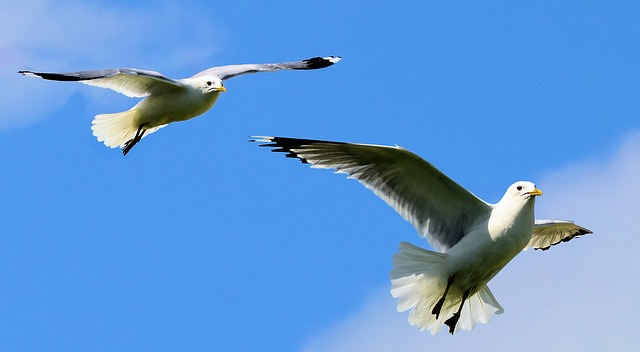 birds-2132889_640