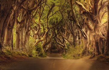 trees-3464777_640