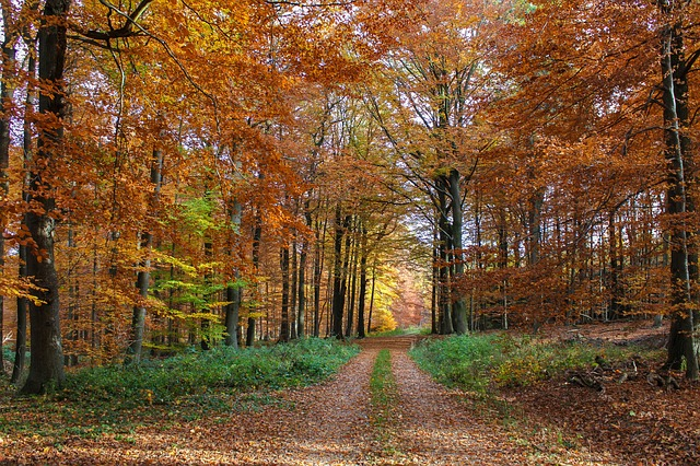autumn-forest-3710367_640