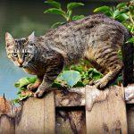 cat-3846780_640