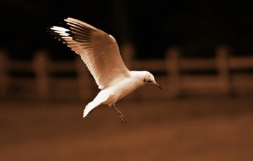 seagull-3907827_640