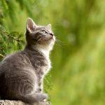 cat-2083492_640