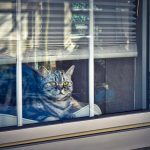 cat-4021547_640