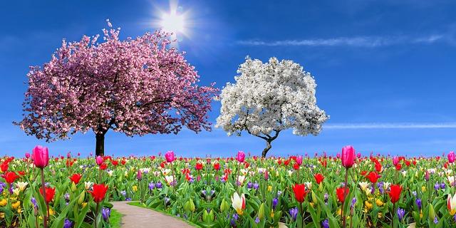 nature-4104638_640