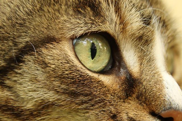 cat-4246594_640