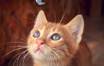 cat-4277400_640