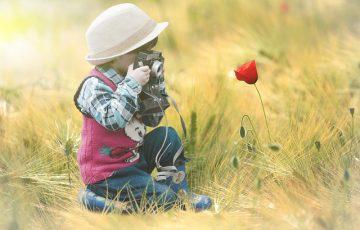 flower-4339932_640