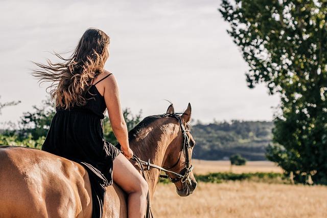horse-3553269_640