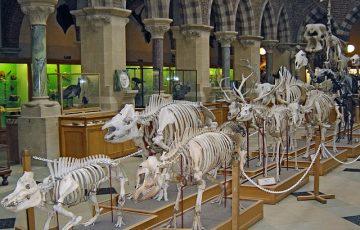 skeletons-268954_640