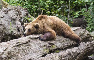 bear-1383980_640