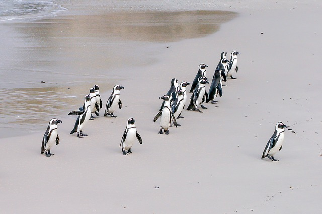 penguin-1719608_640