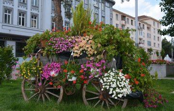 flowers-1770097_640
