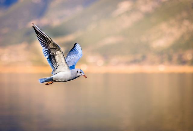 bird-3158784_640