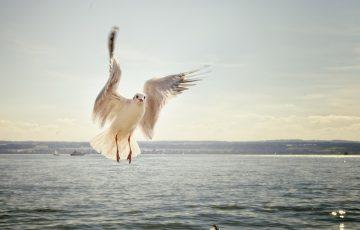 gull-192909_640
