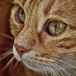 cat-3582978_640