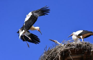 stork-3566099_640