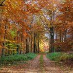 autumn-forest-3710367_640