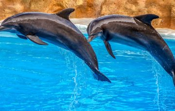 dolphins-3769402_640