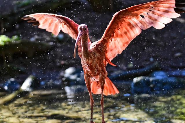 ibis-3809147_640