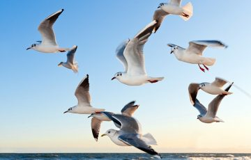 gulls-370012_640