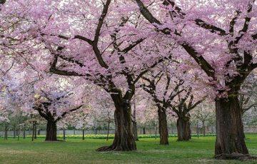 trees-4092293_640