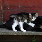 cat-4278756_640