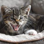 cat-4319144_640