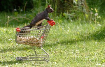 squirrel-4327363_640