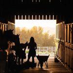equestrian-4426781_640